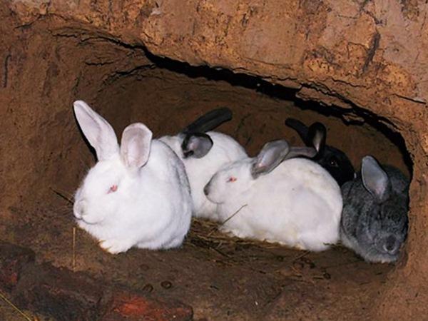 Кролики осваивают яму