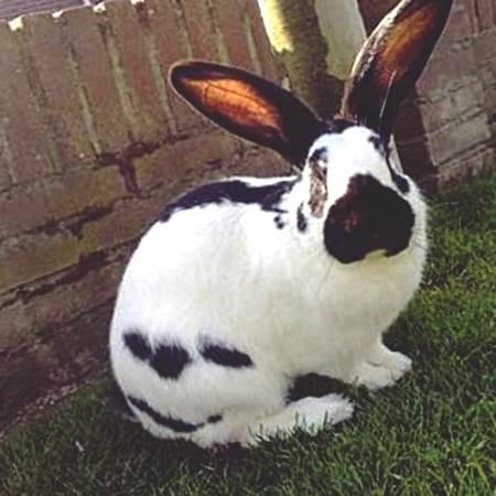 кролик строкач отзывы