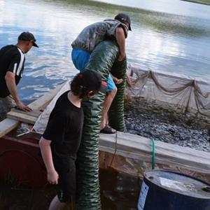 Выращивание рыбы в садках