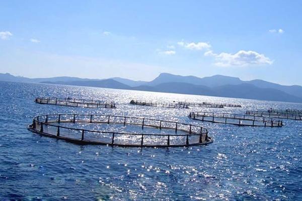 Садки для выращивания рыбы в море