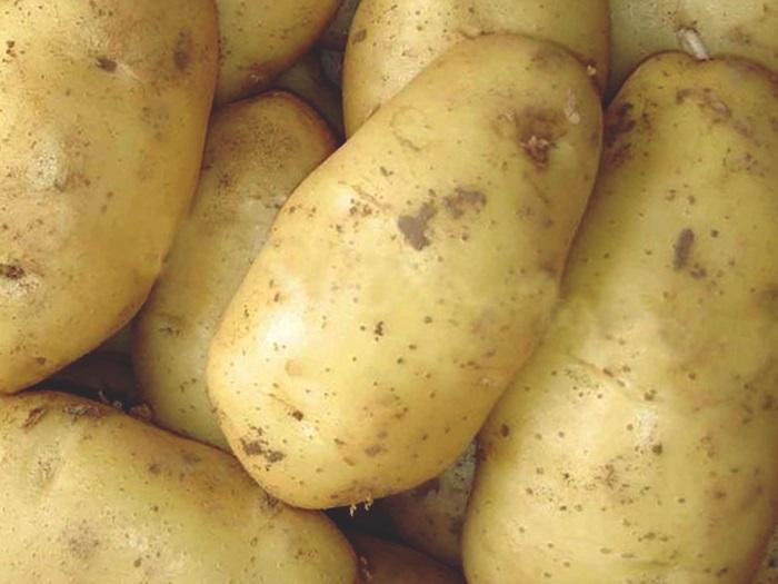 гербах название сортов картофеля с картинками краз станет