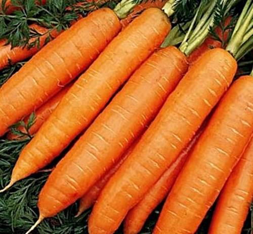 сорта моркови с фото и описанием нандрин