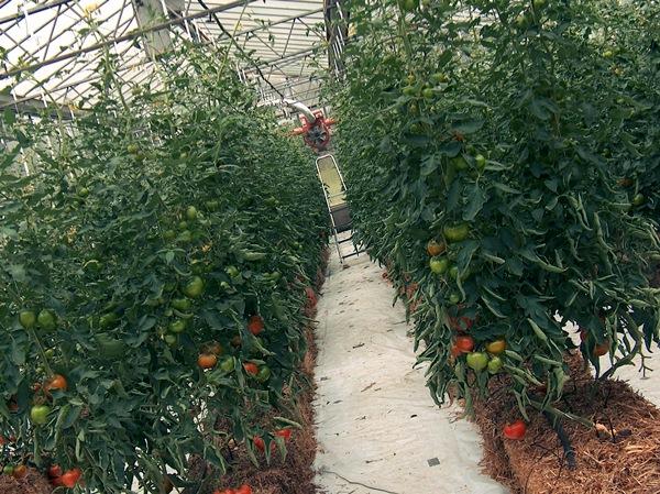 Ценные культуры для выращивания 57